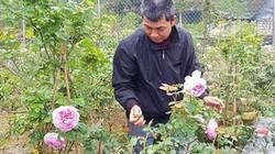 Làm giàu ở nông thôn: Đã mắt ngắm vườn hồng ngoại bạc tỷ ở đèo Vạn Lý