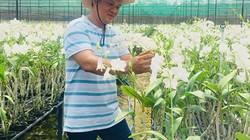 Trồng 6ha hoa lan Dendro, mỗi năm lãi ròng 3,6 tỷ đồng