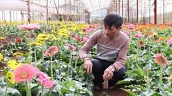 Đà Lạt: Trồng hoa công nghệ cao, lão nông thu tiền tỷ