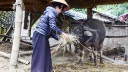 Gồng mình chống rét cho gia súc, gia cầm ở vùng biên xứ Lạng
