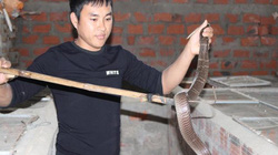 Mạo hiểm đem rắn độc về nhà nuôi, 8x Hà Tĩnh bắt rắn mỗi ngày