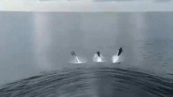 Cá heo phấn khích đuổi theo tàu ngầm tuần tra của Mỹ