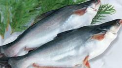 """Mỹ thành thị trường tiêu thụ cá tra lớn nhất, """"vua cá tra"""" Hùng Vương lại ảm đạm!"""