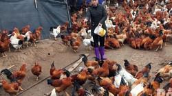 """""""Đột nhập"""" trại 12.000 gà trống thiến bán Tết lớn nhất tỉnh Bắc Giang"""