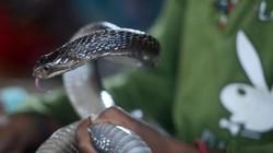 Ấn Độ: Bị hổ mang cắn khi đang ngủ, người đàn ông hành động khác thường