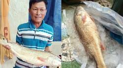 Cá lạ Quảng Ngãi nghi sủ vàng trả 150 vẫn chưa muốn bán