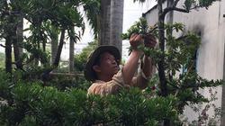 Rời xứ dừa lên phố, làm vườn kiểng độc lạ thu bạc tỷ