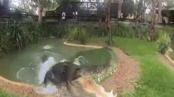 """Xem cá sấu """"khủng"""" dài 5m, nặng 9 tạ nghiền nát xương trong chớp nhoáng"""