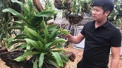 """Trót """"phải lòng"""" hoa lan, 8X xứ Lạng mở nhà vườn lãi 20 triệu/tháng"""