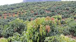 Sơn La phát triển cây ăn quả: Đáp án hay cho bài toán chuyển đổi