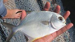 Nuôi 3 loài cá đặc sản trong lồng bán Tết, nông dân trúng lớn