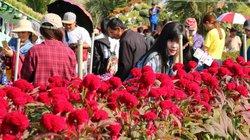 Làng hoa Sa Đéc gần Tết: Người chăm thì ít, người xem thì nhiều