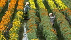 Check-in vườn hoa đẹp ngất ngây gần Sài Gòn ngày giáp Tết