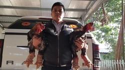"""Nuôi gần 30.000 con gà """"chân voi"""", đạt doanh thu khủng 10 tỷ đồng"""