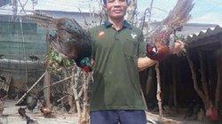 Phát thèm: Nuôi chim trĩ bán Tết, tháng cuối năm bỏ túi 70 triệu