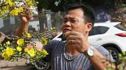 """Hoa mai Bình Định giá trăm triệu """"đổ bộ"""" Hà Nội cạnh tranh đào thế"""