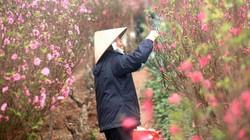Thời tiết hôm nay (31/1): Hà Nội sáng sớm mưa phùn, nóng 26 độ C