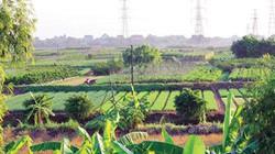 Vườn nhà, vườn đồng và đường đi xuất ngoại