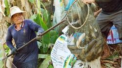 Kéo mỏi tay hàng chục tấn cá đồng ăn Tết ở 'túi cá' U Minh Hạ