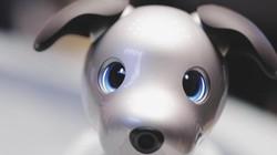 Robot cún con mới nhất của Sony: Biết thể hiện cảm xúc giống con người