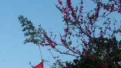 Tục dựng nêu, dán giấy đỏ cầu may chiều 30 Tết của người Nùng xứ Lạng