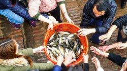 Clip: Hơn vạn người chuyền tay phóng sinh 10 tấn cá xuống sông Hồng
