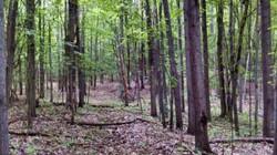 Thị trấn Mỹ rúng động vì phát hiện đáng sợ trong rừng