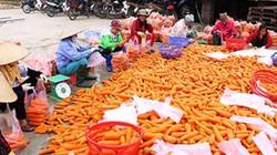 Bắt tay nhau trồng cà rốt sạch, nhà nông ở đây thu 2.000 tỷ đồng/vụ