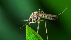 Điều gì sẽ xảy ra khi muỗi không còn tồn tại trên Trái đất?