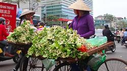 [CLIP, ẢNH]: Hoa bày đĩa gần triệu đồng khiến người dân Hà Nội thích thú
