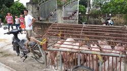 Cận cảnh: Căng mình phòng chống dịch tả lợn châu Phi ở Hưng Yên