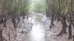 Săn đặc sản tôm đất bé tin hin kiếm tiền triệu mỗi ngày ở Ninh Bình