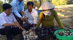 Đầu xuân năm mới, nông dân Quảng Ngãi sôi nổi làm ăn