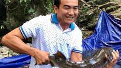 Lợi cả đôi đường: Đưa cá tầm về vừa nuôi vừa ngắm ở huyện đồng bằng