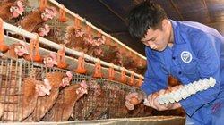 Hà Nội: Quốc Oai đã hoàn thành 9/9 tiêu chí huyện nông thôn mới