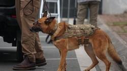 Đặc vụ Mỹ mang chó nghiệp vụ đến Nội Bài,rà soát chặt trước giờ G