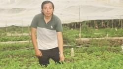 An Giang: 9X bỏ lương 15 triệu về trồng rau, bắt sâu bằng tay