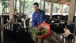 """Đổi đời nhờ 23 con bò sữa, """"vắt"""" đều ra 2 triệu đồng mỗi ngày"""