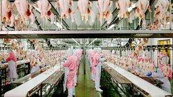 Triển lãm Quốc tế về Công nghiệp Nông sản & Thực phẩm Việt Nam 2019