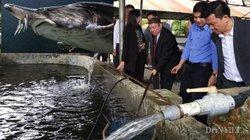 """Trại cá """"khổng lồ"""" Chủ tịch Hội NDVN thăm có gì đặc biệt?"""