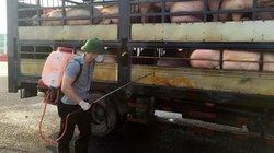 Quảng Ninh: Buộc 6 xe chở lợn từ vùng dịch tả lợn châu Phi quay đầu