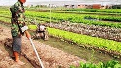 Cây trồng héo hon vì khô hạn, nhà nông vật vã tìm nước tưới