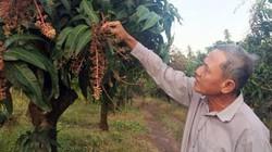 Hội cùng nông dân ứng phó biến đổi khí hậu