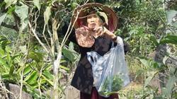 Rau sắng chùa Hương 250.000 đồng/kg, không có đủ bán