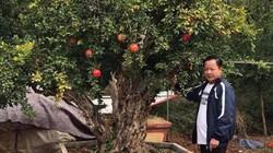 """Điều gì khiến cây lựu được """"hét"""" giá gần 1 tỷ đồng tại Bắc Ninh?"""