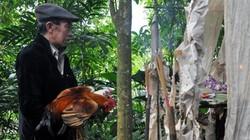 Bí ẩn lễ cúng rừng của người Mông ở khu bảo tồn thiên nhiên Nà Hẩu