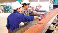 Supe Lâm Thao xuất khẩu 35.862 tấn phân bón