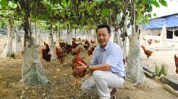 Trại gà ri hữu cơ nghe nhạc thư giãn của ông giám đốc mê nông nghiệp