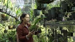 Kiên Giang: Bỏ việc ở phố về quê theo đuổi đam mê lan rừng