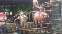 Giữa tâm bão dịch tả lợn Châu Phi: Đìu hiu nơi thủ phủ nuôi lợn lớn nhất miền Bắc